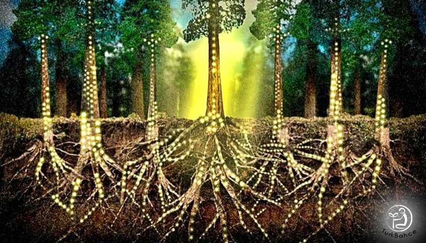 Ağaç sosyal ağ