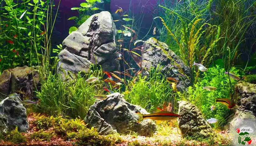 akvaryum ekosistemi