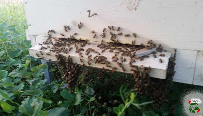 Arı kovan girişi