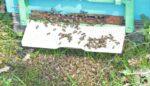 Arı ölümlerinin nedenleri