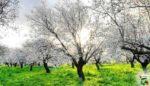 Tarım Takvimi Mayıs