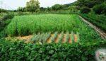 Ekolojik tarım sözlüğü