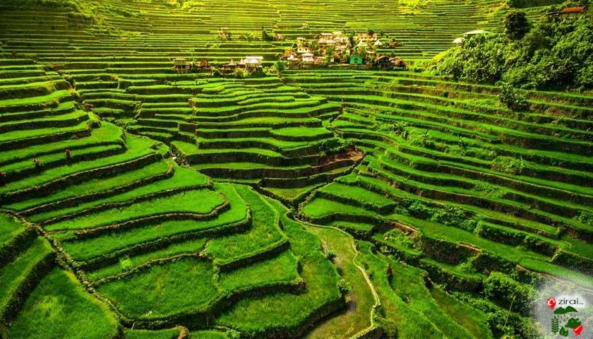 filipinler pirinç terasları