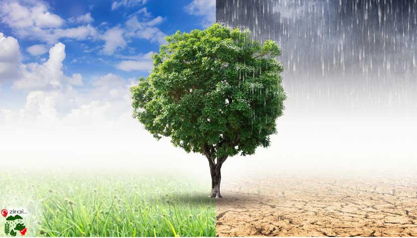 iklim ve tarım