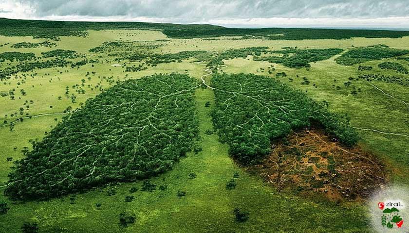 Yeşil orman akciğerleri