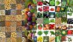 Sebze | meyve | tahıl tohumları alım | satım