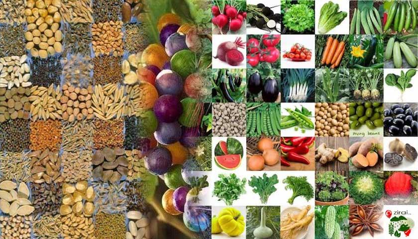Sebze | meyve | tahıl tohumları