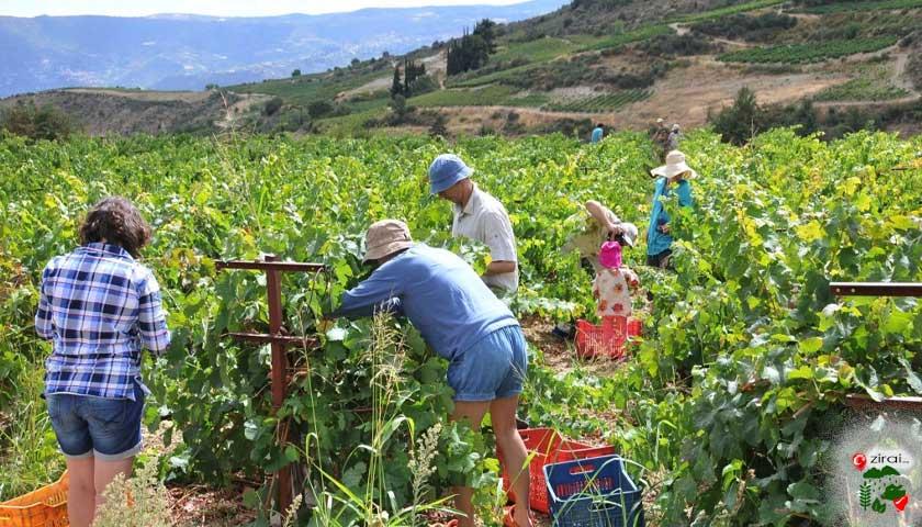 tarla, bağ turizm, agrotourism