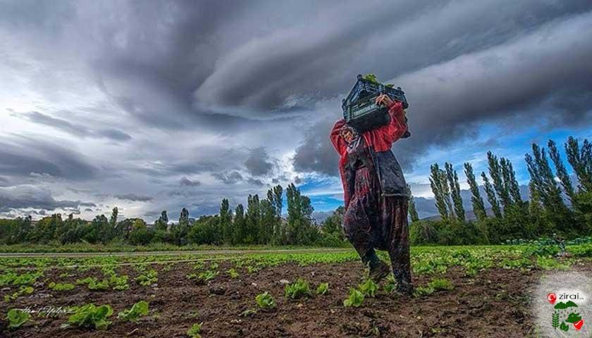 tarlada çiftçi kadın