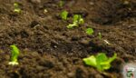 Toprak verimliliği