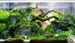 Akvaryum canlılarının kaynağı