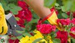 Çiçeklerin bakımı ve yetiştirilmesi