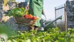 Organik tarımın ilkeleri