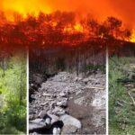 Ormanlar ve orman yangınları